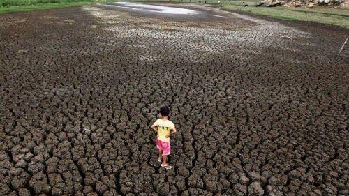 巴西:干旱致土地龟裂畜尸满地!