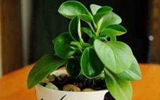 能净化空气的室内植物,9种消除疲劳的办公桌植物!
