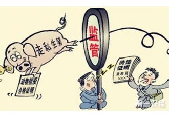 四川合江县开展越南走私生猪专项整治行动 严厉打击走私生猪