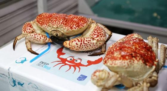 杭州:首次进口活皇帝蟹 是世界上最重的螃蟹!