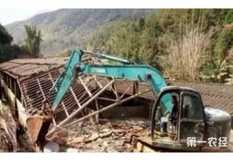 福建延平猪场清拆风暴来袭 百万生猪半个月内清空