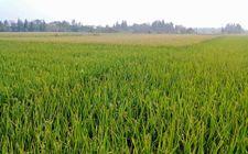 黑龙江:调整农业种植结构 实现农产品合理种植
