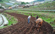 重庆渝北:农业供给侧结构性改革 提升农业供给质量