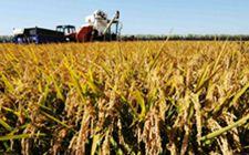 黑龙江哈尔滨:坚持绿色发展 保质保量完成生产