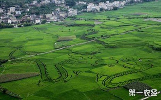 广西三江:传统绿色食材助力精准扶贫