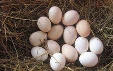 内蒙古赤峰:鸡蛋价格低迷 创历史新低