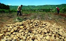 山西岚县:土豆品牌致富路