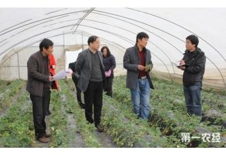 陕西户县:田间地头春耕生产一片繁忙