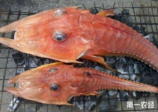 印度尼西亚渔民发现神秘海洋生物