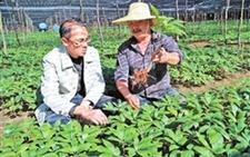 云南大姚:着重发展优势产业创收益