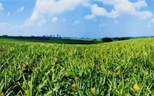 吉林洮北:开创现代农业品牌产业之路