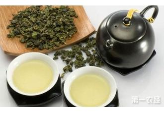 乌龙茶的种类怎么划分?乌龙茶有哪些品种?