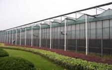天津辛口:大力推广大棚种植 实现农业增效增收