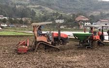 重庆:统筹推进农业生产各项工作 切实保证农业种植增收增效