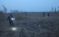 山东滨州:村民深夜捉蟹 河蟹市场供不应求