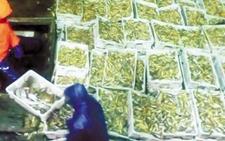 浙江嵊泗:渔船出海十天 产值高达60万元