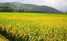 安徽:做好四个优化工作 加快推进农业建设发展
