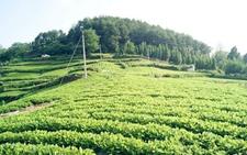 江苏泗洪:专项资金奖励扶持县特色农业发展