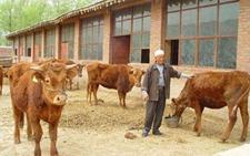 宁夏:利用文化产业丰富生活助脱贫