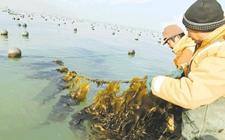 宁夏:落实渔业供给侧改革 推进渔业转型升级