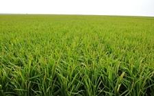 江西新余:大力发展绿色生态农业 走可持续发展道路