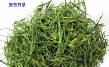安吉白茶多少钱一斤?