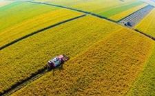 互联网农业:互联网为三农增加活力