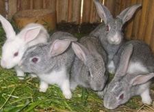 养殖兔子更赚钱吗?如何提高兔子的成活率