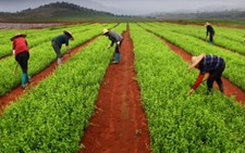 山西:积极优化农业产业布局 推进农牧融合绿色发展