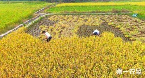 如何激活农村集体资产?集体经济怎么分配才合理?