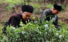 <b>安徽:加快农业品牌创建工作 培育有竞争力的特色农业</b>