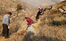 山东沂源:农业废弃物再循环利用 综合整治农村环境难题