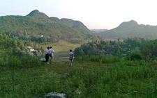 贵州黔西:大力发展特色农业 改善乡村生活条件