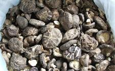 """义乌:干香菇未泡发直接食用 大妈胃里""""长""""香菇"""
