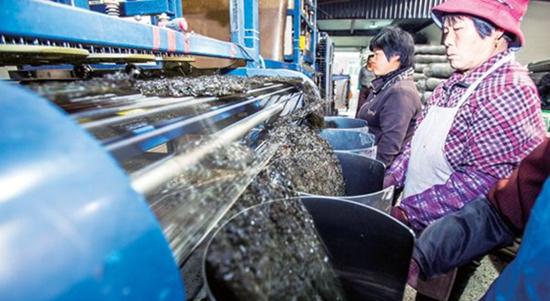 """福建泉州:""""塑料紫菜""""谣言不破 紫菜市场难以维系"""