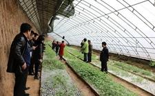 陕西:2017年将开展种植业系统转型升级示范引领行动