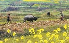 初春时节农业供给侧春耕春播工作由南向北渐次展开