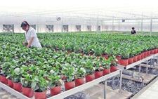 <b>黑龙江:省农委将在全省评选200名优秀农村实用人才 给予2万元奖励</b>