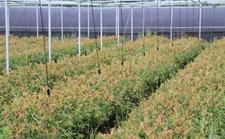 第九届中国(浙江)瓜菜种业博览会将进一步推动科企合作及成果转化