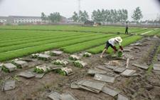 重庆江津:紧急发布水稻烂种死苗防治工作通知
