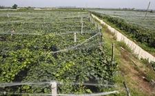 陕西西安:推广节本增效模式 发展绿色生态农业