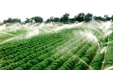 湖南:严格精准把控农业种植环节 树立优质绿色农业品牌