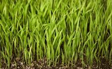 水稻种植:水稻育苗和秧苗期的管理技术要点