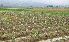湖南北湖:首创现代农业奖补制度 落实农业供给侧改革