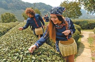 <b>2017年全国各地陆续进入春茶采茶期</b>
