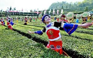 <b>2017年湖北五峰春茶旅游节 开幕式采茶表演场面震撼</b>