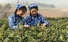 2017含山县第四届采茶节将持续一整个月