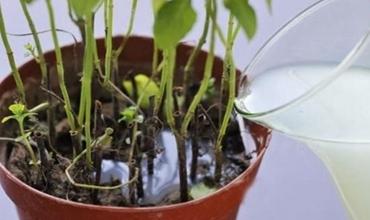 用这5种水浇盆栽植物 不用施肥就能长得旺!