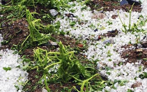 贵州:冰雹灾害致40204人受灾 直接经济损失达1781万元