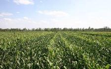 甘肃金川:互换并地 整合农村土地资源